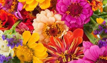Florists in Dyce